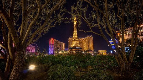 A view on hotel Paris through some trees