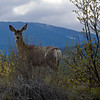 welcoming deer!