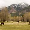 Bull River Guest Ranch, British Columbia, scrapbook retreat!