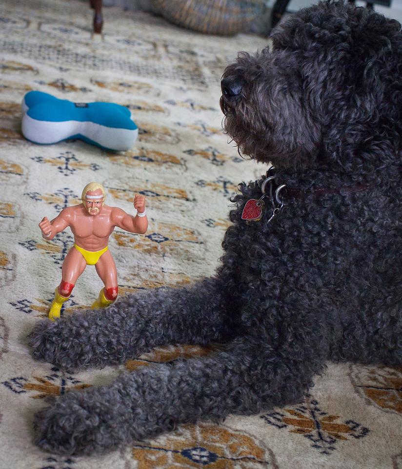 Mr. Hogan ain't afraid of no dog!