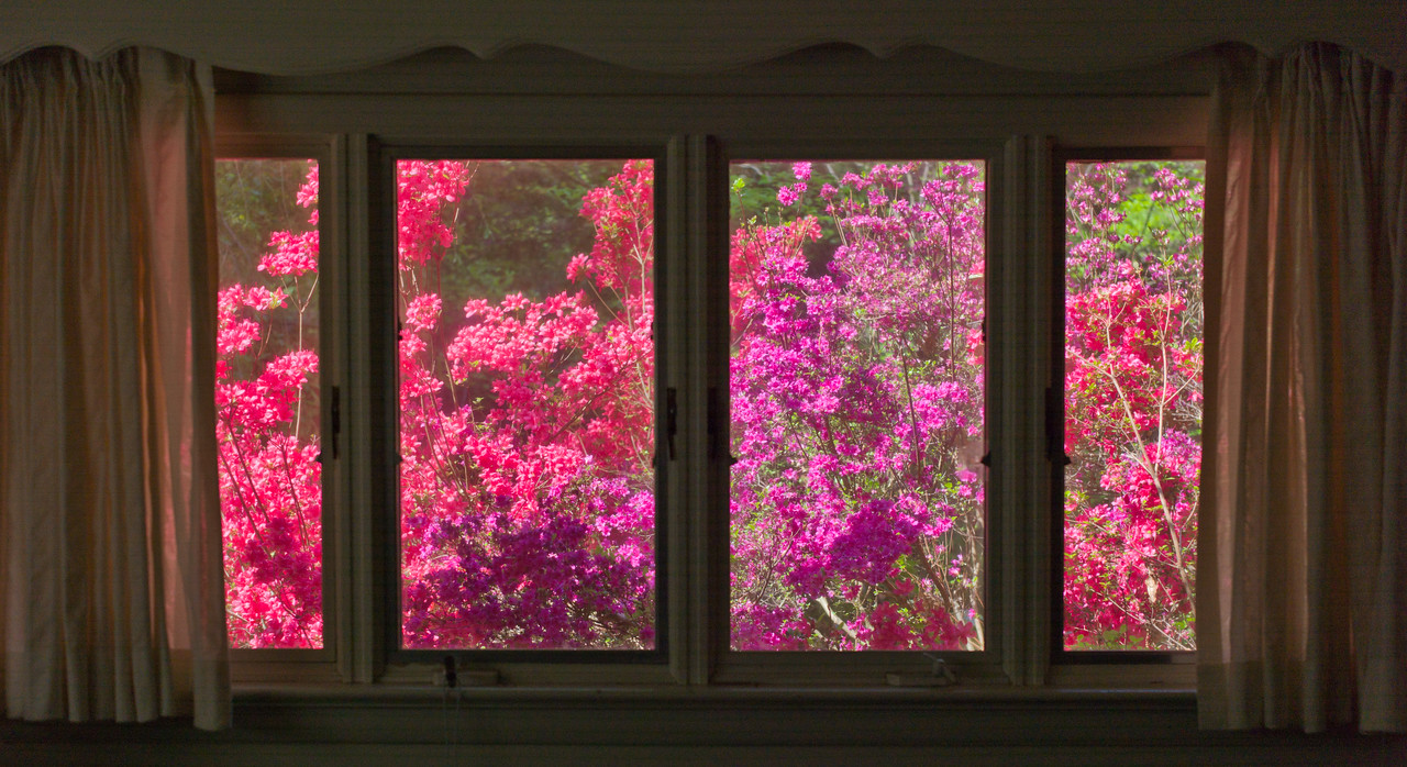 View out 2nd bedroom window during the flowery season.