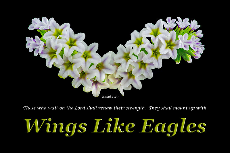 """Wings of Glory"""
