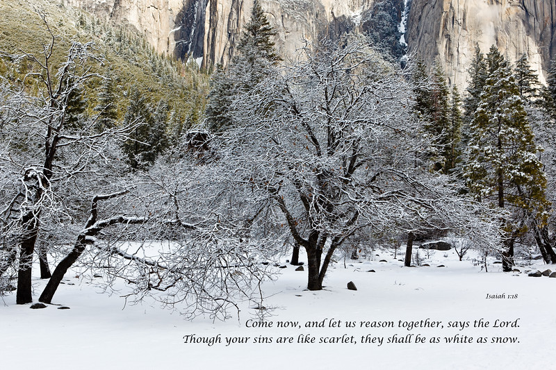 """Yosemite Valley Trees and Snow"""