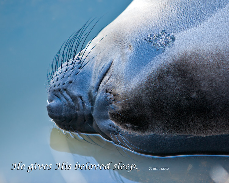 """Sleeping Juvenile Elephant Seal"""