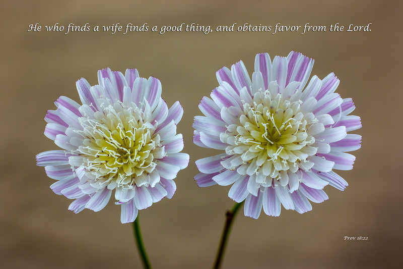"""""""Cliff Aster Blossoms"""""""