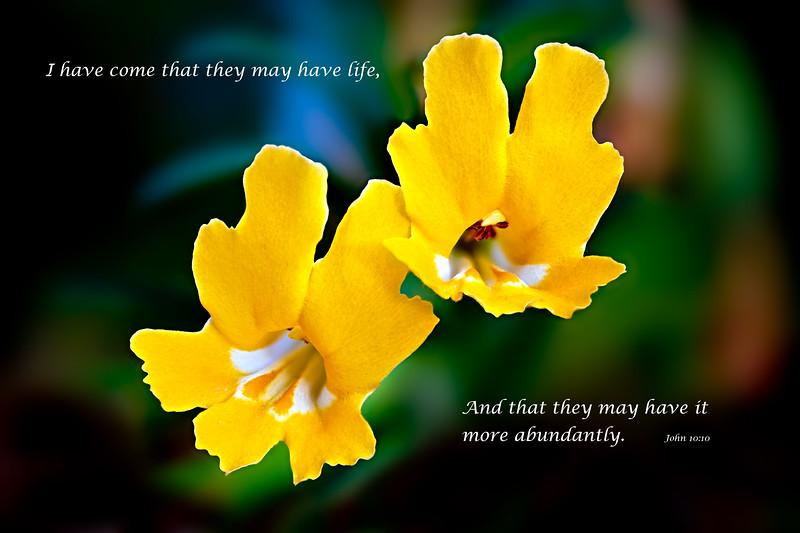 """""""Monkey Flowers"""""""