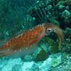 squid 1 bonaire 090513