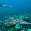 squids bonaire 090513