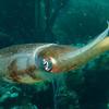 squid best bonaire 090513
