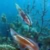 squid pair bonaire 090513