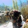 coral pillar bonaire 090113