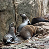 Sea lions congregate on the rocks.