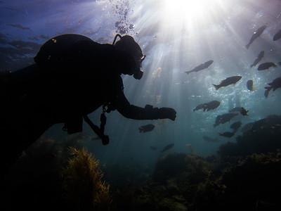 Scuba Dive Trips