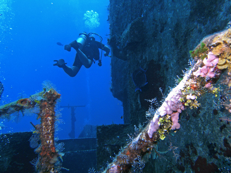 The wreck railing blooms with color.