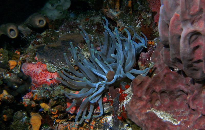 Amazing colors on the reef, anemone and sponge.