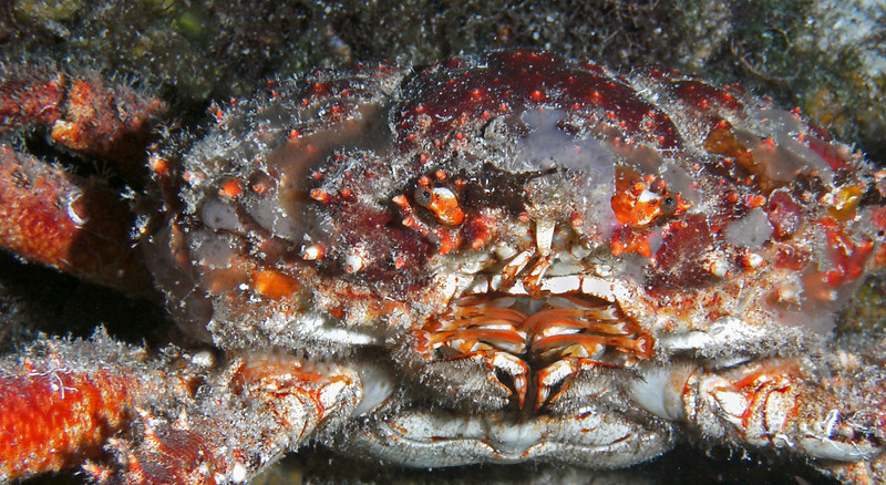 Crabby face.
