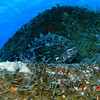 A giant grouper guards the superstructure of the wreck.