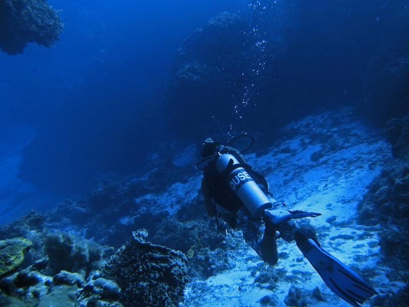 Descending through Horseshoe Reef.