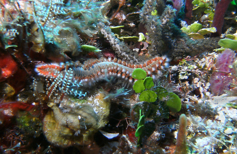 Bearded fireworm - looks soft and furry, but don't touch. Thoses are little venom tipped barbs.