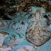 Octopus face.