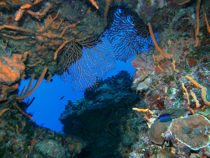 """One of the many reef """"skylights"""" at Horseshoe Reef."""