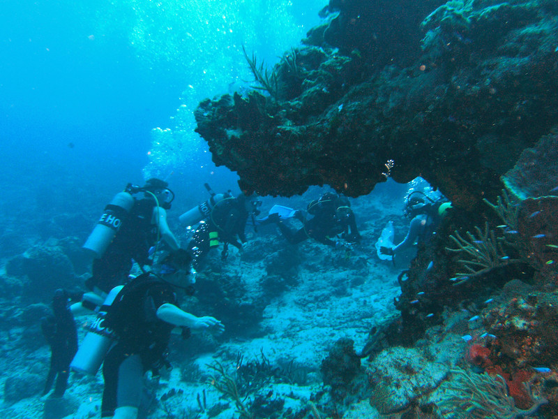 Our group is called over by the divemaster and we gather round to see what he wants to show us.