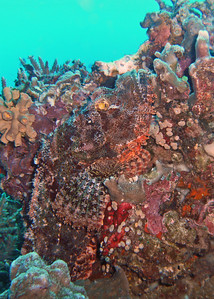 Find the scorpion fish. Hint - his eyes are gold and he is vertical.