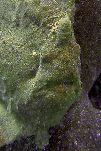 Frogfish face.