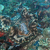 Giant clam, feeding.
