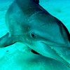Dolphin swim by - they like to check you out and look into your eyes.