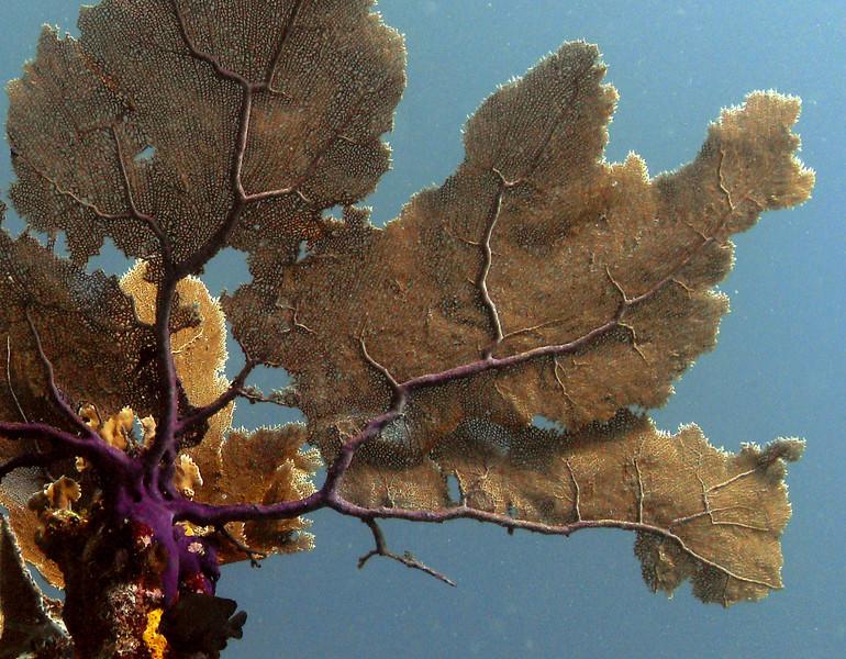 Fan coral art.