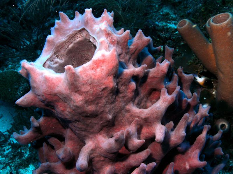 Large sponge.