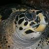 Eye to eye with my turtle friend.