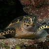 My turtle friend.