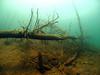 Fallen underwater trees.