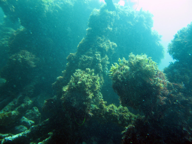 View of paddle wheel shaft and hub from Winfield Scott wreck.
