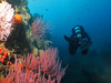Andy swims along the port side of Valiant; lots of colorful gorgonians, sponges and anemones