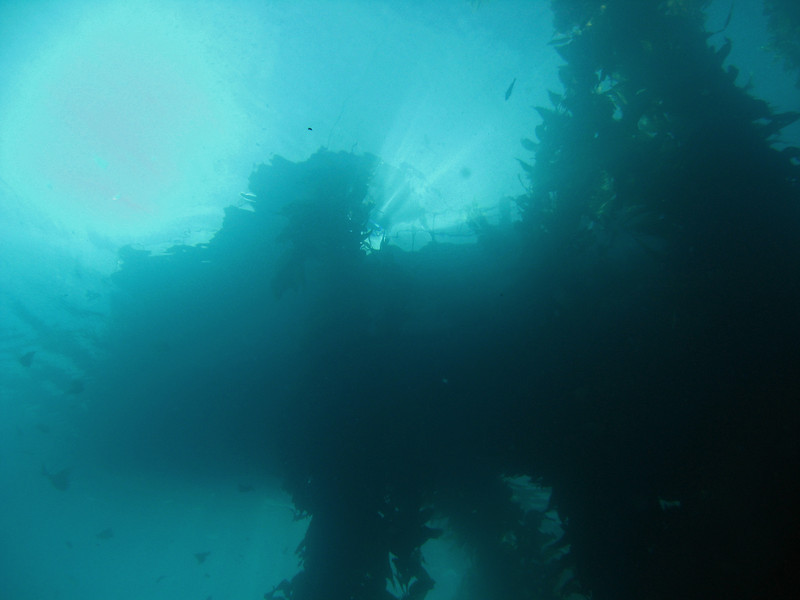 Seabass Dive Boat, from below...