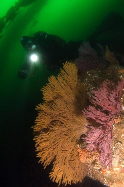 Nayan and Gorgonian Sea Fans