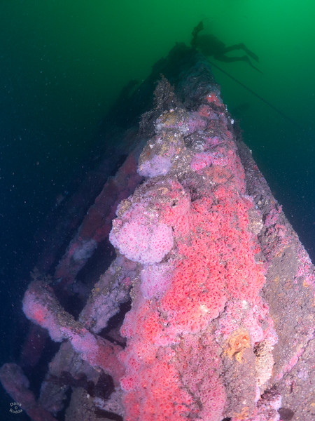 Olympic Wreck, bow section, on a dark morning.