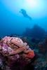 Reef scene with seastars and red urchins, from Santa Cruz Island, California.