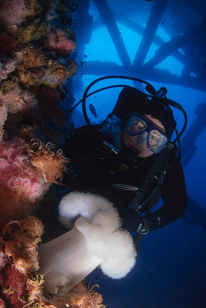 Anastasia and a beautiful Metridium farcimen anemone among Corynactis anemones, brittle stars, and many other colorful invertebrates.  95 ft deep at Oil Platform Eureka, San Pedro, CA.