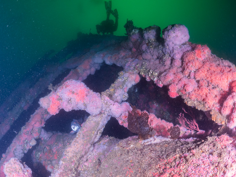 "Olympic Wreck, bow section, on a dark morning.  Check out the male Sheephead ""aaaaaaaahhh""!"