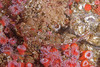 Small sculpin - Can you see it?  Very good camouflage!
