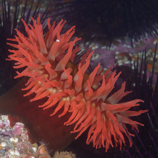 Fish eating anemone (need to confirm)