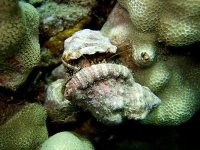 unidentified hermit crabs - 20070903_000077_crop1