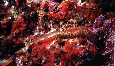 cave_worm1