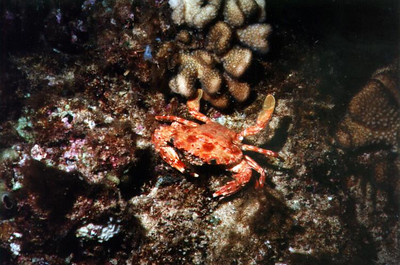 crabby_crab_1