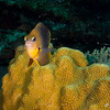 Damselfish - just checking us out