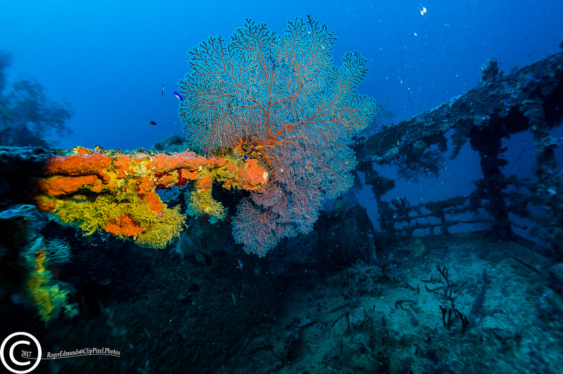 Rear deck of the Aikoku Maru in Chuuk Lagoon with fan coral